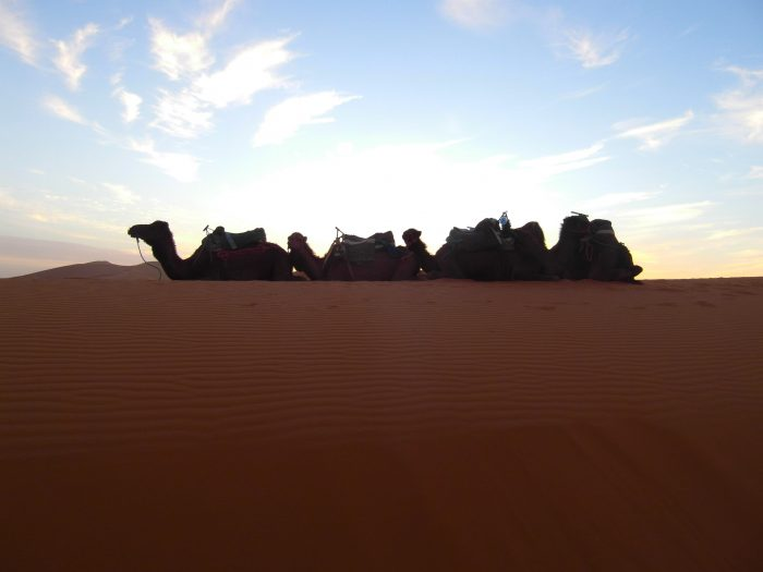 Camel Train, Erg Chebbi desert